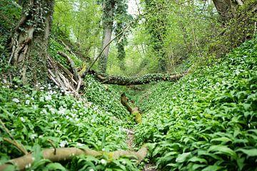 Voorjaar in het Daslook bos van Marieke Smetsers