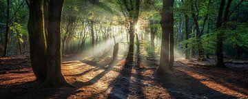 Panorama van een beroemd Nederlands bos bij zonsopgang van Martin Podt