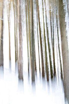 forêt de pins en hiver sur Guido Rooseleer