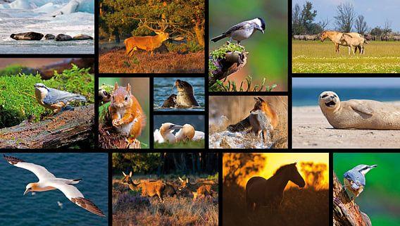 Collage dieren