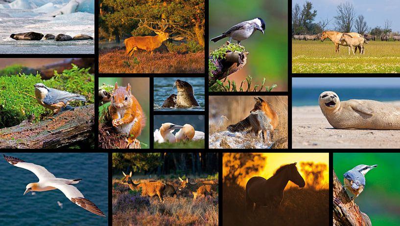 Collage dieren van Anton de Zeeuw