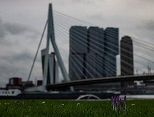 Early spring van Thom de Steenhuijsen Piters