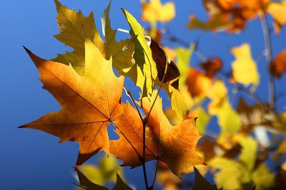 Autumn Leaves van Cornelis (Cees) Cornelissen