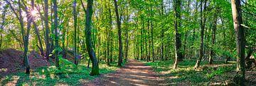 Bos en bomen natuurpanorama met zonnestralen van 77pixels