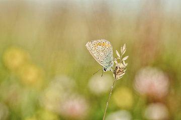Vrolijke zachte kleuren van de vlinder en de bloemen van Caroline van der Vecht