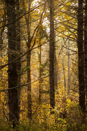 Herfstbos  van Margreet Frowijn