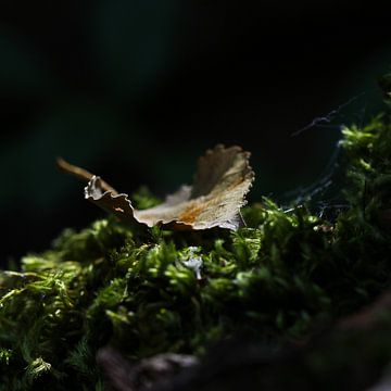 herfstblad op mos van Bianca Muntinga