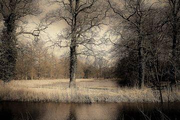 Natuur van Angela van den Berg
