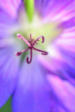 paarse bloem von Lisanne Bosch