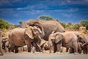 Bain de poussière d'éléphant, Namibie sur W. Woyke