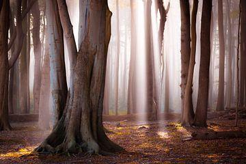 Herbst im Wald von Martin Wasilewski