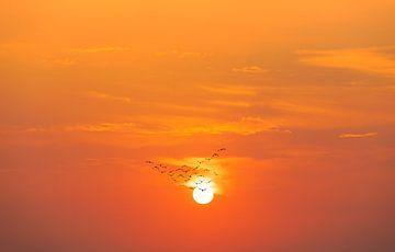 Zugvögel vor untergehender Sonne von Tilo Grellmann | Photography