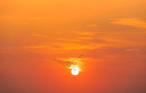 Les oiseaux migrateurs avant le soleil couchant sur Tilo Grellmann | Photography