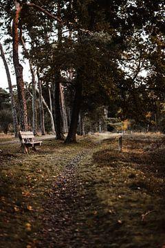 Wandelpad door het Eerderbos bij Ommen van Holly Klein Oonk