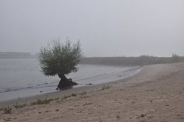 boom aan de oever bij Ooi van Jeroen Franssen