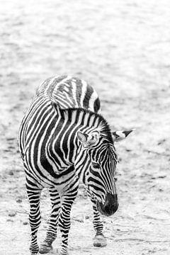 Zebra von Marcelis Meihuizen