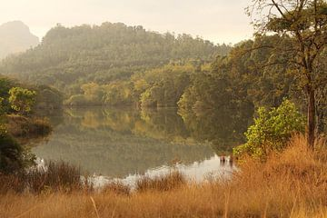 Weerspiegeling in het meer van het bos van