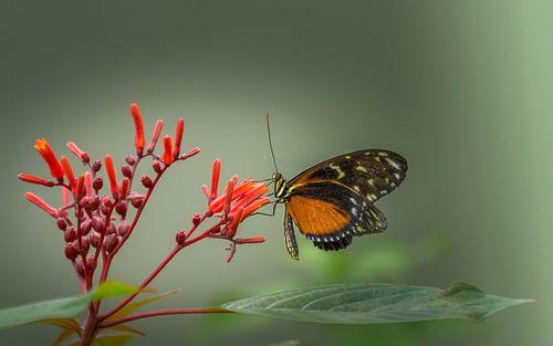 Vlinder op bloem van