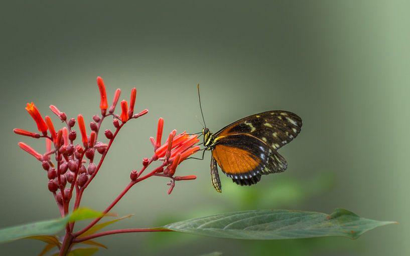 Vlinder op bloem van Maarten Leeuwis