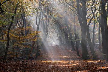 Zonneharp in een herfstbos van Barbara Brolsma