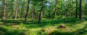 bomen op een kleine helling van zeilstrafotografie.nl