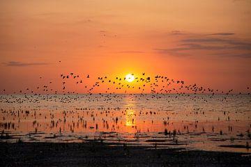 Vogelschwarm bei Sonnenuntergang von Barbara Brolsma