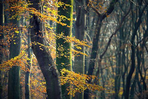 Herfstkleuren aan de bomen in het bos