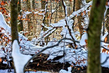 Le soleil entre les arbres dans un parc d'hiver. sur Jurjen Jan Snikkenburg