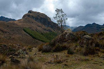 Ecuador: El Cajas National Park (Azuay) van Maarten Verhees
