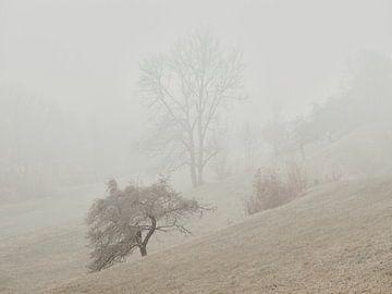Novembernebel in der Ostalb 2 von Max Schiefele