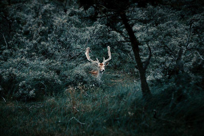 Dear in the woods. van Dylan Barkley