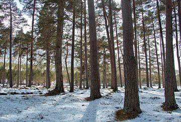 Winterbos, sneeuw tussen de bomen, boslandschap van simone opdam