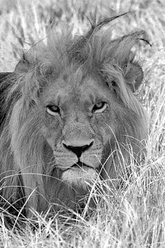 Der Löwekönig von Filip Staes