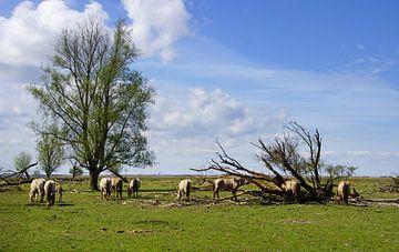 Wild horses, Oostvaardersplassen von Mirjam Hartog