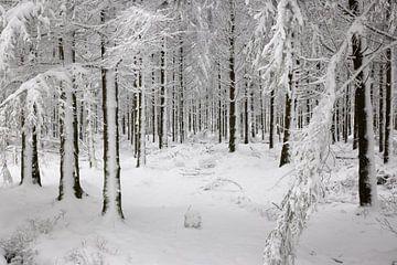 Sneeuwlandschap in de Hoge Venen van Easycopters