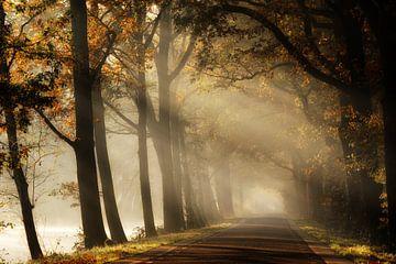 Jenseits des Nebels von Kees van Dongen