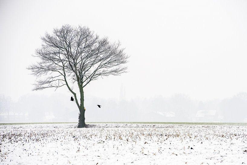 Een kale boom in de mist van Gonnie van de Schans