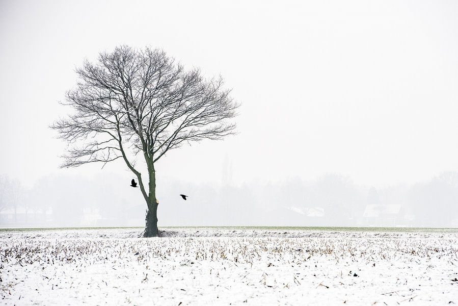 Een kale boom in de mist