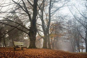 Een Bankje in het Bos van