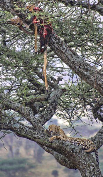 Leopard's Tree van BL Photography