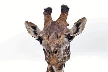 Tête de girafe sur Bart van Mastrigt