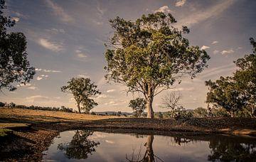 Farmland Eukalyptus von Sven Wildschut