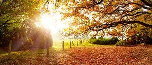 Prachtige natuur in de herfst