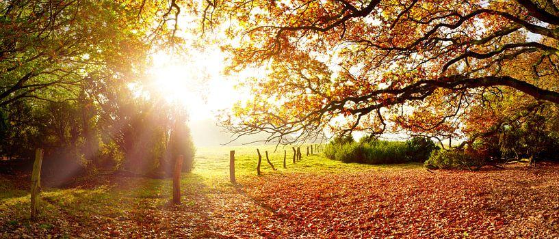 Prachtige natuur in de herfst van Günter Albers