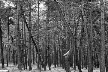 Into the woods van Loes Jansen