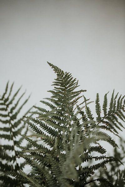 Farne vor einer weißen Wand | Minimalistische Fotografie | Amersfoort, Niederlande von Trix Leeflang