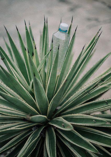 Water plant van Marieke Gras