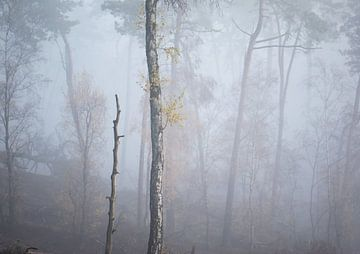 mistige boomstammen van Tania Perneel
