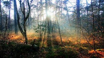Winter zon in het bos van Arjan de Kreek