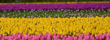 tulpen von Erwin Reinders